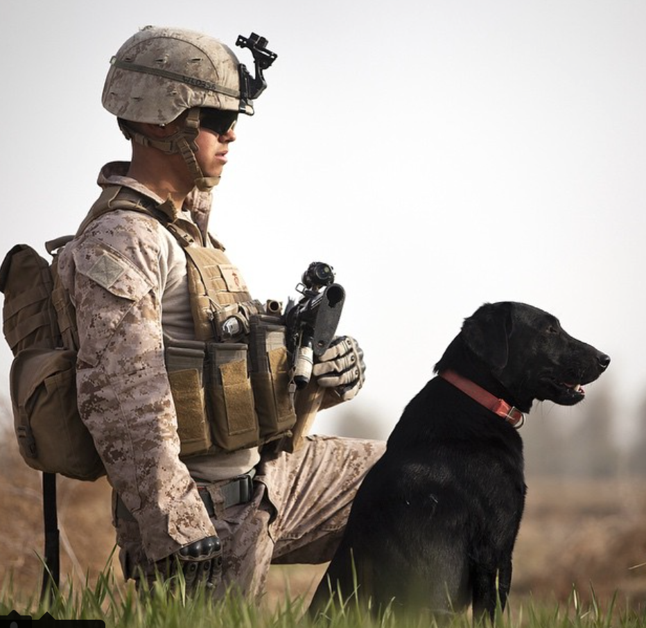 How To Send A Care Package To A Dog Serving Overseas