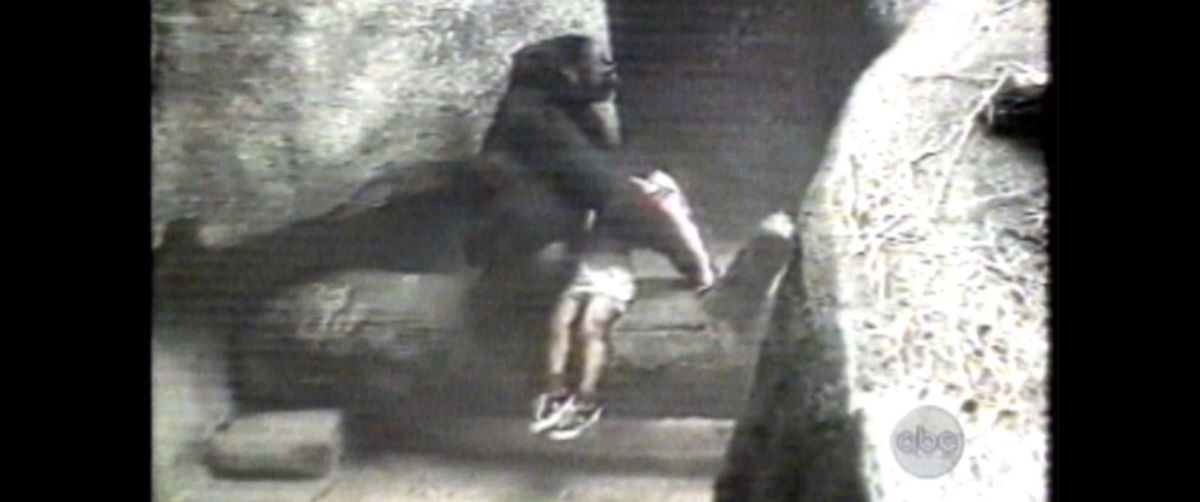 [WATCH] AMAZING Gorilla Rescues Boy, Here's Why!