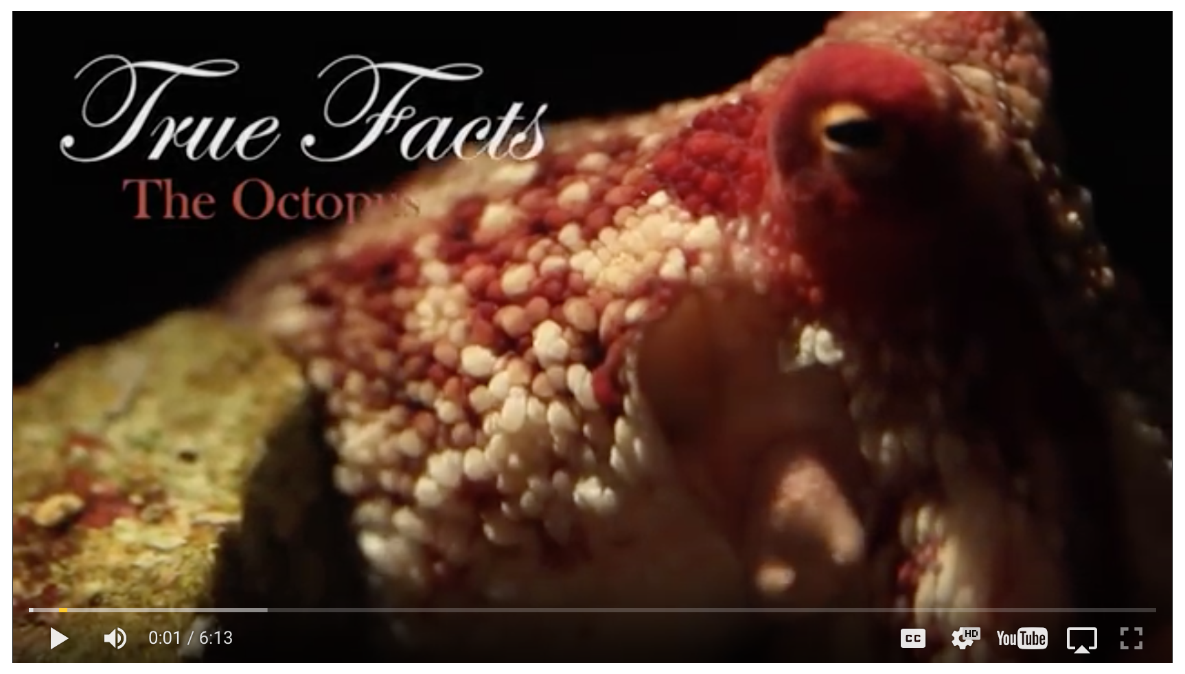 Who Knew An Octopus Could Be This Hilariously Funny? WATCH!