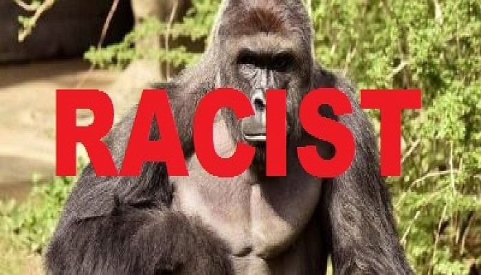 Racist Harambe. [Cincinnati Zoo/Handout via Reuters]