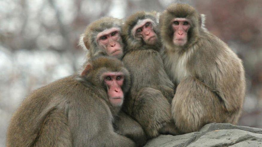 GOVERNMENT WASTE: More than $3 MILLION spent to study drunken monkeys