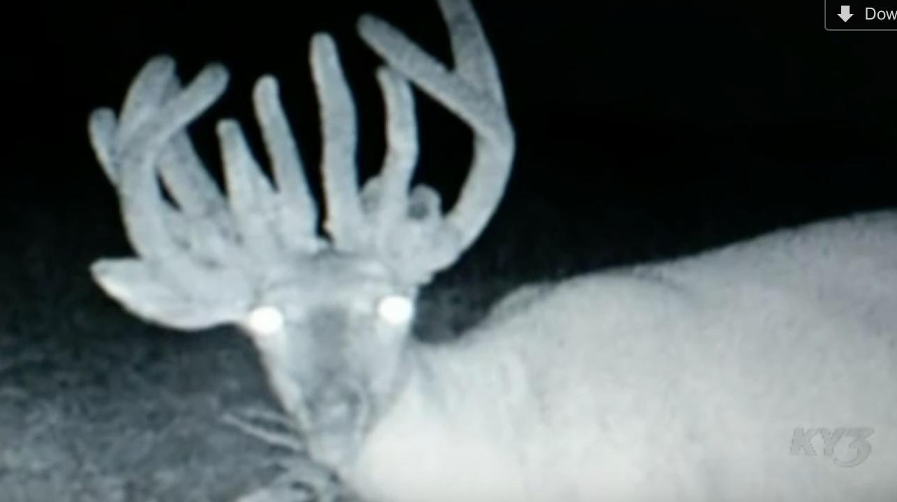 Missouri Man Shoots 22 Point Trophy Deer, But … It's Not A Buck