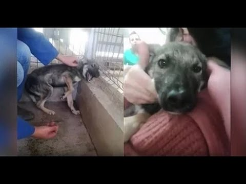 [HEARTBREAKING VIDEO] Will Bring A Tear To Your Eye: Abused Dog Stroked For The First Time