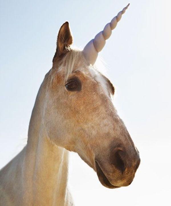 Scientific Revelation! Fossil Confirms Unicorns Were Real