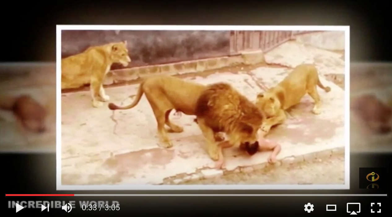 [VIDEO] Man Jumps Into Lion's Den, Naked!