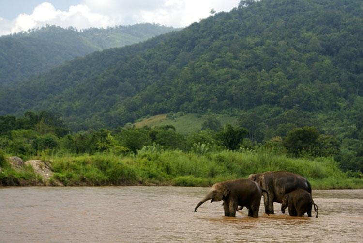 elephant-nature-park-7