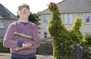 Pensioner Jim Hughes from East Wemyss, Fife, has created a 14 foot cockerel he's names Jock from an old cherry tree. Aug 10 2016.  See Centre Press story CPCOCK; A pensioner says his old cherry tree has become a tourist attraction after he shaped it to look like a giant cock. Jim Hughes, 73, climbed up a ladder and cut branches off the ivy-covered tree to create a 14ft male chicken by using a pair of sheers and secateurs. He then stuck pieces of red plastic on its head to make a beak and a comb - comb is the technical term for the fleshy area at the top of a chicken's head. The grandfather surprised his missus with the bizarre sculpture and says tourists are now stopping outside his home to take pictures. It took him just 30 minutes to do it.