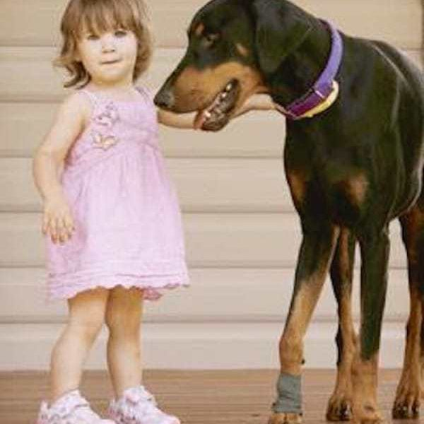 Doberman Picks Up Baby By Diaper and Tosses Her Away…But It's Not What You Think