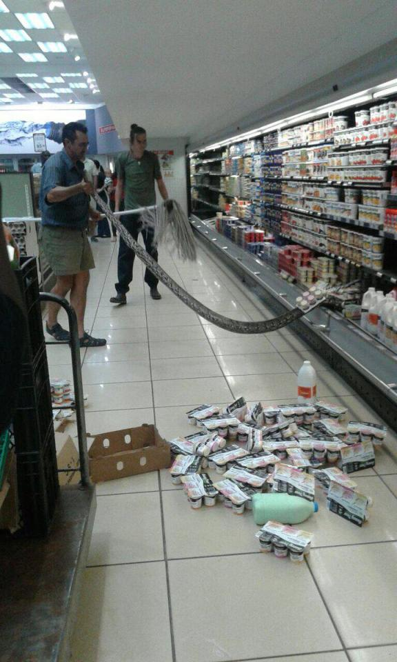 12-foot-long Python Found In The Fridge